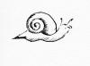 Silly Snail